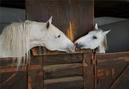 Pferdegestützes Spiegeln
